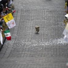 dog runs through a parade