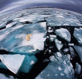 polar bear on cracked ice