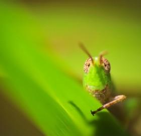 hello, i am grasshopper