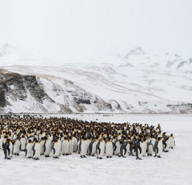 penguins gathering for a photo