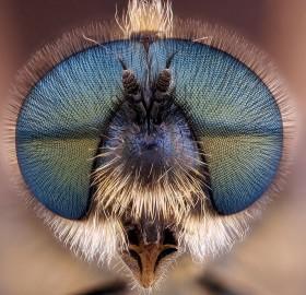 fly head close-up