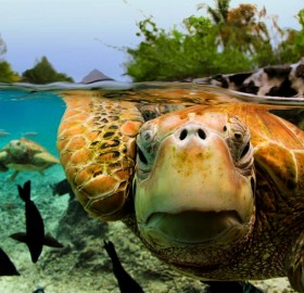 The Amazing World Of Turtles In Photography