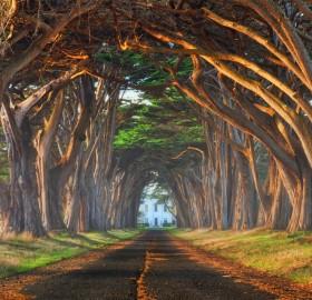 tree tunnel, california
