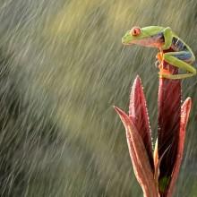 How To Photograph Rain