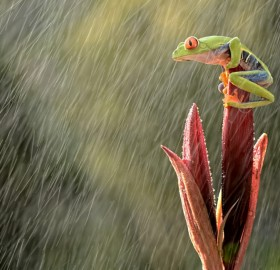 How To Photograph Rain