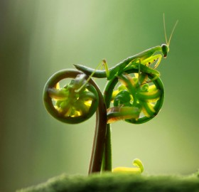 mantis on natural bike