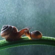 snail family under the rain