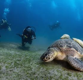 the superstar of undersea
