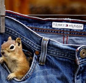 squirrel in my pocket
