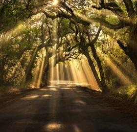 sun rays shining through trees