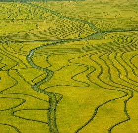 rice field, uruguay