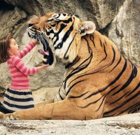 """say """"aaahhh"""" big tiger"""