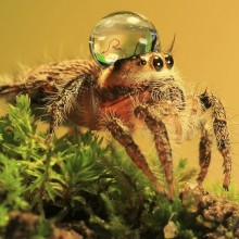 spider with water drop on his head