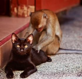 monkey gives cat a back massage