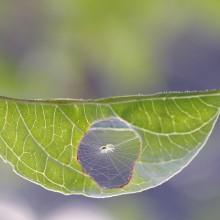 spider net inside leaf