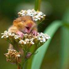 the happiest mouse in the world