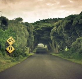tree tunnel, australia