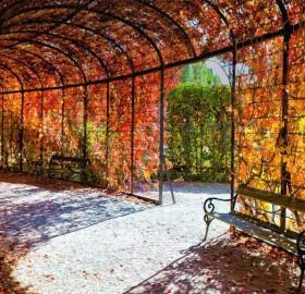 autumn in vienna, austria