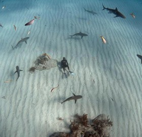 chilling with the sharks