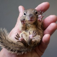 squirrel in my hand