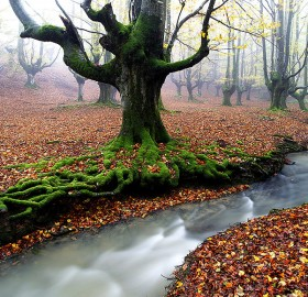 deep in the forest, spain