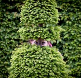 hide and seek, gardens of versailles, france