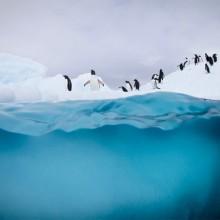 12 Amazing Photos From Freezing Antarctica