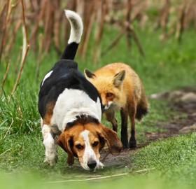 world`s worst hunting dog