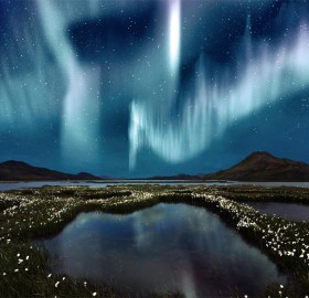 northern light over wildflowers, iceland