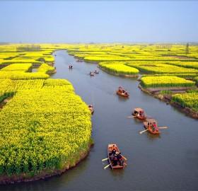 flowering cole fields near xinghua city, china