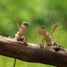 lizard friends