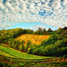 beautiful fields of serbia