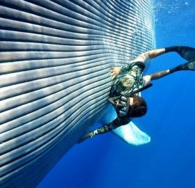 diver swims with blue whale photo