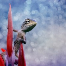 lizard on a flower