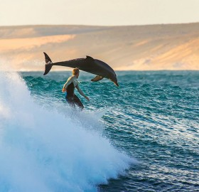 surfing with the dolphins