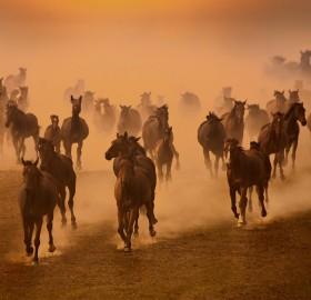 free herd of horses
