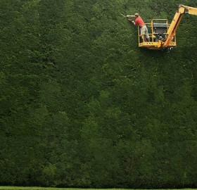tallest hedge in the england, over 300 years old