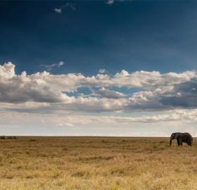 elephant bull, serengeti, africa