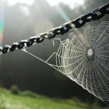 spider web on sunshine