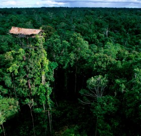 abandoned korowai tribe treehouse, indonesia