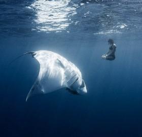 meditating with manta ray