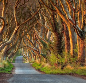 beautifully tree lined road, ireland