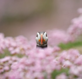 puffin in flowers