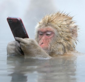 japanese snow monkey and his smart phone