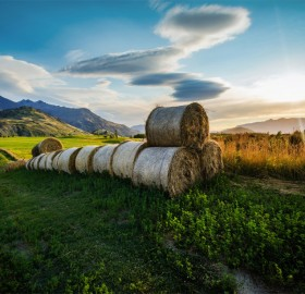 bales of hay fields, new zealand