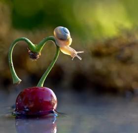 romantic snail