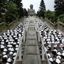 1600 pandas bellow tian tan buddha, hong kong