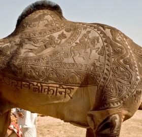 beautiful camel haircut