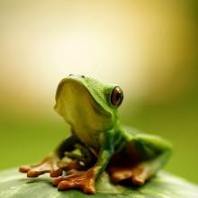 hello, i am cute frog