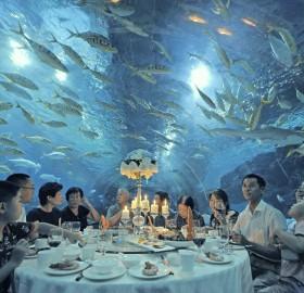 restaurant under aquarium